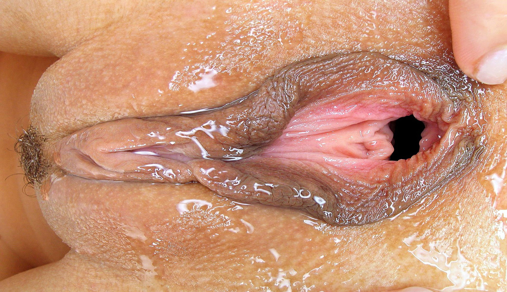 Nasty Pussy Pictures